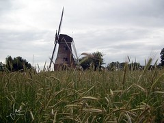 Rekken 2005 - Piepermolen (glanerbrug.info) Tags: 2005 holland netherlands windmill nederland paysbas achterhoek niederlande windmolen gelderland windmühle rekken moulinàvent berkelland