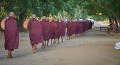 photocopie couleur (cyril4494) Tags: monk myanmar homme birmanie garons moine nikond700