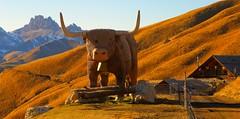 Surprise on the trail _MG_9368m(2) (maxo1965) Tags: sculpture highlander bull trail mountainhut dolomites sassolungo friedrichaugust trentinoaltoadige