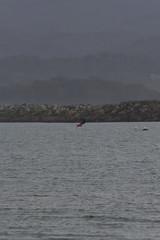 IMG_2568 (armadil) Tags: beach beaches mavericks kitesurfers windsurfers californiabeaches