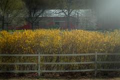 Spring is around the park ... (max tuta noronha) Tags: horses green yellow cavalos wtf stable vcp hff pqp wfn vancourt vancourtdlandpark taketheonetrain gothavepark