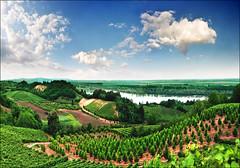 Vineyards (Katarina 2353) Tags: summer panorama film nature landscape nikon europe serbia vineyards donau srbija katarinastefanovic katarina2353