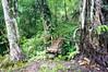 (kuuan) Tags: bridge bali forest rainforest bamboo mf manualfocus 15mm voigtländer heliar superwideheliar aspherical gobleg f4515mm voigtländerquot