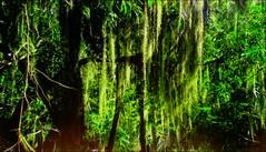 tree tropical (Cleide@.) Tags: brazil  tree art texture digital photo branches ps exotic shining 2016 artdigital sotn awardtree magicunicornverybest cleide netartii