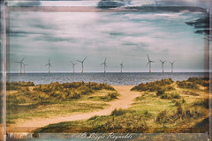 Wind Turbines as seen from North Drive, Great Yarmouth (lizzieisdizzy) Tags: sea grass three seaside sand energy power wind dunes electricity tall blades renewable turbines marram seasidetown