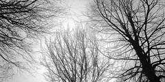 trees in fog 1788 (s.alt) Tags: winter bw detail tree texture nature monochrome silhouette fog blackwhite ast branch nebel natur struktur sauber sw schwarzweiss rein ste kalt sonne bbs bume morgen schatten baum nas zweige nass feucht treesinfog gest astwerk natureunveiled nssen beautyofsilhouettesandshadows baumstructure
