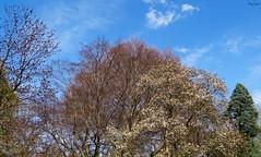 Trees in April (Harry Lipson) Tags: trees nature treeline springtime treesinapril harrylipsoniii harrylipson