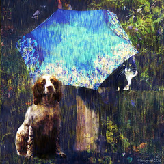 She always gets the best seat! (Lemon~art) Tags: dog pet texture rain weather umbrella cat fence manipulation