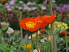 IMG_1159_C (from_the_sky) Tags: garden center strümpfelbach