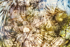 Multiple Nature 328 (pni) Tags: light bokeh multipleexposure bubble tripleexposure multiexposure scotspine skrubu pni neelde nikrus helsinkihelsingforsfinlandsuomipekka