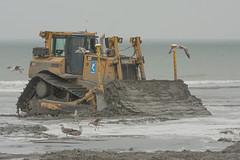 's-Gravenzande (Jan de Neijs Photography) Tags: sea cat noordzee zee caterpillar westland zand kust zuidholland buldozer sgravenzande d8t snijder kustversterking catd8t hetwestland dedelflandsekust
