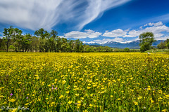 Sunny meadow (borisbitsin) Tags: trees nature grass landscape meadow sunny bulgaria  belitsa