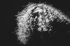 Jimmy Nevski (mecenas zielon) Tags: portrait bw musician music white black hair manchester creativity blackwhite energy artist noir guitar livemusic blues skills jamming passion psychedelic peaceonearth guitarist confidence gibsonlespaul jimmynevski 2confidence