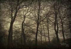 Woodland arteries. (Wizard Snaps) Tags: wood morning mist fog bush woods glory sensual preston haighton