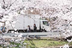 The other side (Wunkai) Tags: japan 桜 cherryblossom sakura さくら 茨城 土浦 ibarakiken 新川 tsuchiurashi