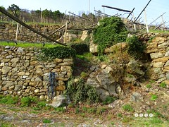 Sdtirol - South Tyrol (Italy) - Alto Adige - Italia > In und um  Algund (Lagundo)  2016 (warata) Tags: italien italy alps italia alpen blte sdtirol frhling altoadige southtyrol dolomiten 2016 weinberge algund waalweg