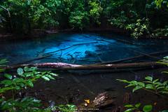 THE BLUE POND (::: a j z p h o t o g r a p h y :::) Tags: travel blue lake reflection tree tourism forest thailand pond log turquoise krabi waterreflection