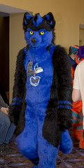 _DSC9718 (Acrufox) Tags: midwest furfest 2015 furry convention december hyatt regency ohare rosemont chicago illinois acrufox fursuit fursuiting mff2015