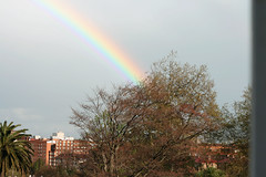 rainbow  (Slya Cabret) Tags: city sky naturaleza tree cute nature beautiful arcoiris wonderful arbol rainbow colorful cielo frommywindow