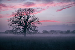 mist in the evening (blackslowlight) Tags: mist clouds nebel bluehour lonetree madeingermany blackslowlight