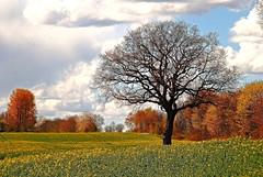 Es geht los....( Explore ) (   flickrsprotte  ) Tags: deutschland natur himmel wolken explore april raps baum schleswigholstein 2016 aprilapril 2442016
