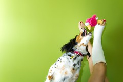 A por l! (elmagodelabahia) Tags: dog green girl fashion wall pared jump model colorful chica legs action flash moda modelo perro salto pjaro peluche piernas chroma colorido escayola accin teddybird