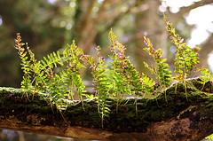 ecosystem (Big Malks) Tags: wild fern tree woods ecosystem