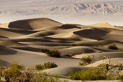 Mesquite Sand Dunes II (lycheng99) Tags: california shadow plants mountains nature contrast landscape nationalpark sand ngc mesquite shade deathvalley peaks curve sanddunes mesquitesanddunes deathvalleynationalpark distantmountains