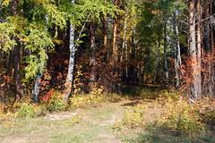 DSC_6013 (Rustam Bikbov) Tags: autumn september 2012    sverdlovskoblast
