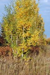 DSC_6060 (Rustam Bikbov) Tags: autumn september 2012    sverdlovskoblast