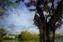 Paysage de Mayenne (kate053) Tags: nature fleurs printemps etang mayenne