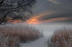 Freezing in the fog (piotrekfil) Tags: sunset sky mist lake snow tree ice nature fog reeds landscape twilight pentax dusk poland sigma1750mmf28 piotrfil