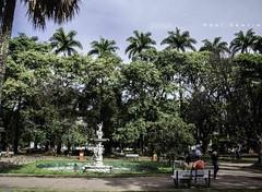 Do pouco verde que temos a idolatrar (Centim) Tags: cidade minasgerais brasil nikon foto br capital paisagem mg praa belohorizonte fotografia bh vegetao estado amricadosul pas sudeste d90 praadaliberdade continentesulamericano