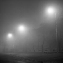 Walks in the fog (szabolcsagai) Tags: mediumformat hungary tripod ilfordhp5 ilfordid11 mamiyac330f mamiyasekor80mmf28 sekonicl308s manualdevelopment