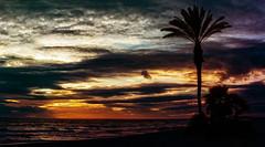 Dream (Thomas +/-) Tags: sunset sea sky tree clouds spain outdoor palm torrox mlaga