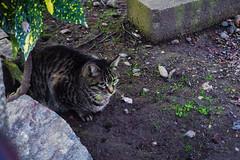 Today's Cat@2016-02-06 (masatsu) Tags: cat pentax catspotting mx1 thebiggestgroupwithonlycats