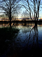 Flood plain near Sunneymead park (breakbeat) Tags: park trees plant water reflections river landscape outdoor dusk symmetry oxford serene benches flooded floodplain sunnymead