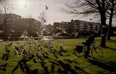 Bird-feeder (Eveans Mellonie) Tags: winter holland film amsterdam birds 35mm kodak warmth nikonfe westerpark sunnydays ektar nikkor24mmf28 ektar100
