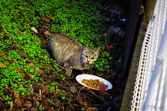 Today's Cat@2016-01-21 (masatsu) Tags: cat pentax cc100 catspotting mx1 thebiggestgroupwithonlycats
