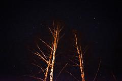 Growth to Infinity (alexwinger) Tags: night stars nikon birch 35 emptiness
