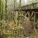 Pontes verdes