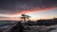 Lehnriffkiefer (MD-Pic) Tags: autumn sunset pine clouds germany deutschland nationalpark nikon sonnenuntergang saxony herbst wolken sachsen kiefer felsen schsischeschweiz elbsandsteingebirge saxonswitzerland d7100 lehnriff