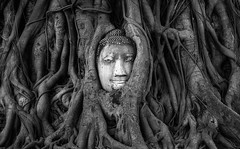 Immortalized (Paul Weeks Photography) Tags: travel art monochrome thailand religious ancient buddha religion roots landmarks ayutthaya