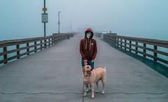L1001442 (jiaxu he) Tags: california leica dogs 50mm labrador yellowlab newportbeach konica yami orangecounty m9 mhexanon
