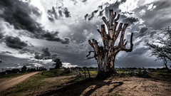 Limits (Explored #16) (ing.nechevarria) Tags: tree planta clouds landscape outdoor paisaje nubes rbol airelibre