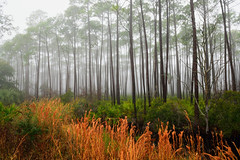 Wetlands Edge (jfusion61) Tags: trees nature st fog pine clouds landscape nikon florida wildlife palm marks national swamp wetlands palmetto refuge 2470mm d810 pandhandle