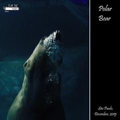 Polar Bear (JAM Farhat photos -Jamile, Amanda e Marcelo) Tags: bear water animal polar paulo so urso