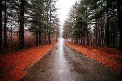 Road Into The Woods (SplitShire) Tags: road morning blue autumn light shadow wallpaper mist tree green nature rain weather misty fog mystery night forest landscape evening scary woods purple wind path background magic fear ground fantasy rainy frame horror moonlight