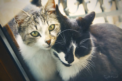 Love is.. (Stella_Kar) Tags: cats pets cute glass animals posing kittens greeneyes cuteness cateyes filmstock beautifulcats catshugging