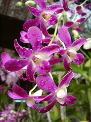 20040915-09150005 (Sebastian Vazquez (svbtato@arrakis.es)) Tags: naturaleza flora viajes thailandia